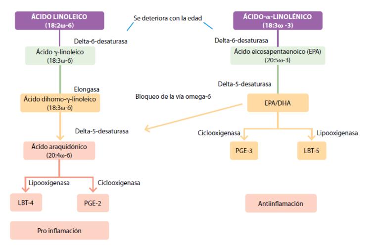 vías metabólicas de los ácidos grasos poliinsaturados omega 3 y omega 6