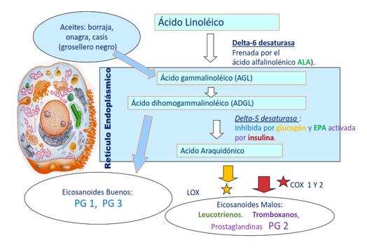 Inhibición de la vía del ácido áraquidonico por los omega-3