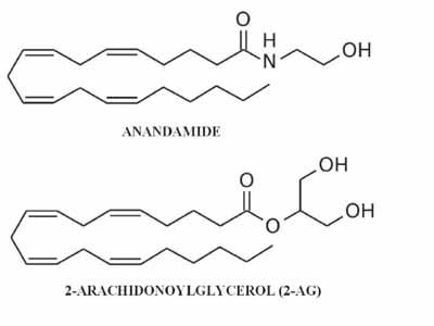 Estructura química de los endocannabinoides