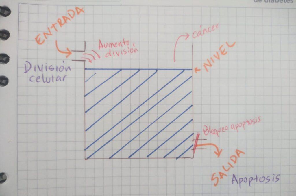 Errores en la división celular y la apoptosis