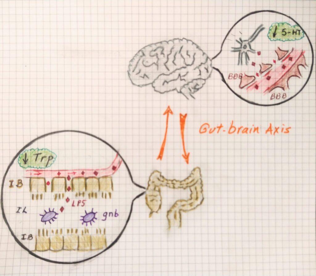 Microbiota Intestinal y Depresión