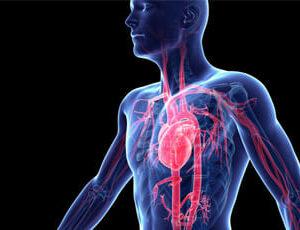 Siste-ma-sistema-circulatorio