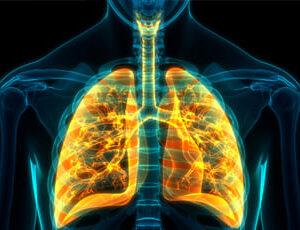 sistema-respiratorio
